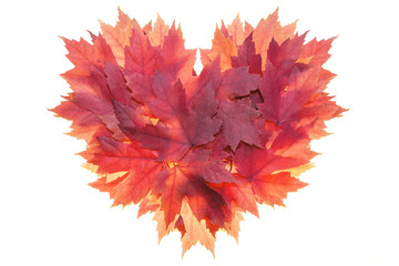 Red Maple Leaves Formed Heart Shape