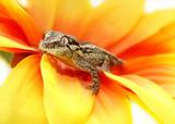 Fototapete Reprsentationsbau - Gelb - Reptilien / Amphibien