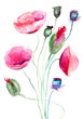 Quadro Poppy flowers, watercolor illustration