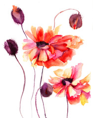 Beautiful Poppy flowers, Watercolor painting