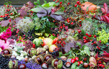 Gesammelte Herbstschätze, Floristik