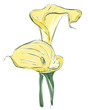 vector flower calla twin