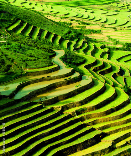 terraced rice field in sunshine, Yen Bai, Vietnam