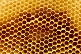 Fragment of honeycomb