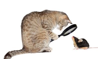 Cat with myopia