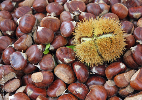 chestnut and a pungent Hedgehog with the fruit inside