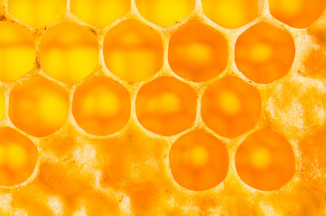 frame with honeycomb full of honey