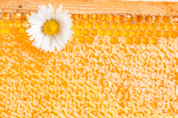 Daisy on a background of honeycombs