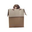 Hiding in a Box