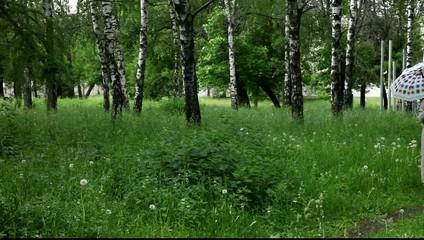 Мужчина и беременная женщина под зонтом идут по лесу