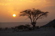 Tree in the Sahara desert, sunset