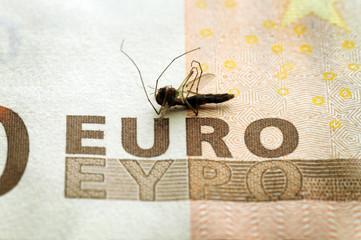 Zanzara  Mosquito  Moustique Mücke κουνούπι