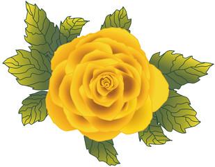 Lindas Rose gelb