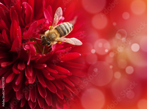 Fotobehang Lilac Flower with bee , defocused lights on background