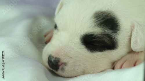 newborn puppy sleeping on white fabric