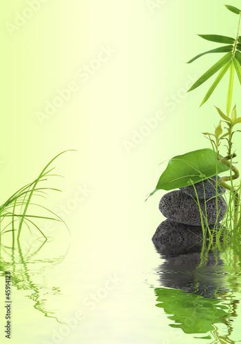 Fototapeten,bambus,gras,natur,gras