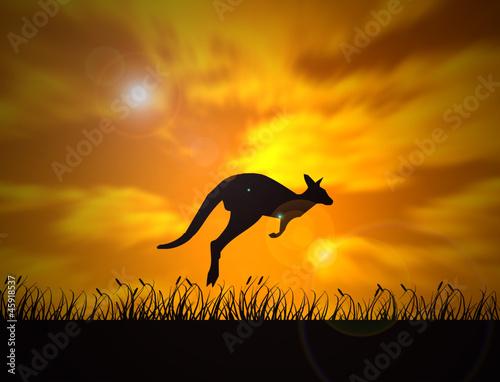 Fototapeta australia - zwierzę - Dziki Ssak