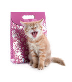 red kitten yawns on the background of the gift bags