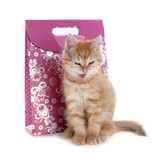 red kitten grinned at the background of the gift bags