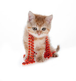 red kitten sitting in a tree on the white beads
