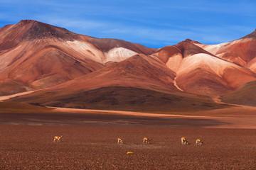 Altiplano plateau, Bolivia