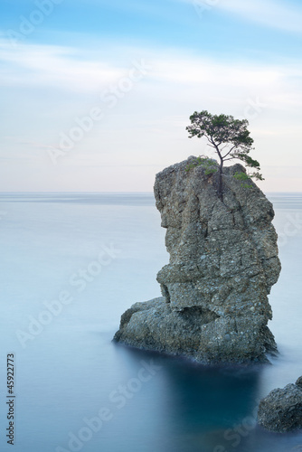 Portofino park. Pine tree rock.Long exposure. Liguria, Italy
