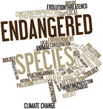 Word cloud for Endangered Species poster
