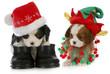 puppy santa and elf
