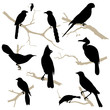 Birds silhouette set. Vector.