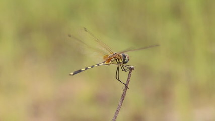 Dragonfly in windy day