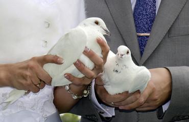 Белые голуби в руках молодоженов
