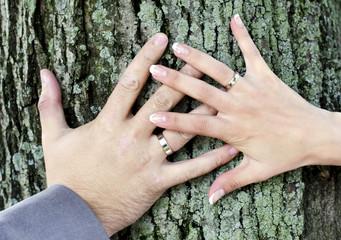 Руки молодоженов с обручальными кольцами на стволе дерева