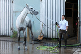 jockey wash horse from hose near stable