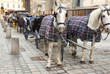 Many horses in cape with open carts, coaches on pavement street