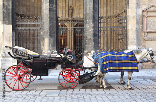 Two horse in cape with open cart on pavement street