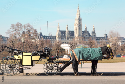 Two horses in cape with open cart near Wiener Rathaus