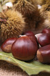 close up on chestnut
