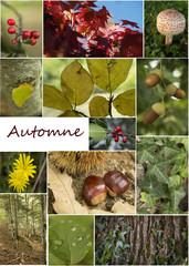 pêle-mêle automne