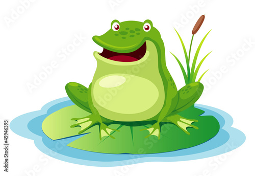 illustration of green frog on a leaf pond
