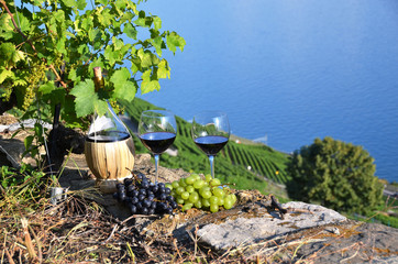 Red wine and grapes in Lavaux region, Switzerland