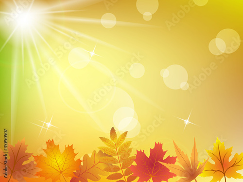 Autumn leaves in sunlight background