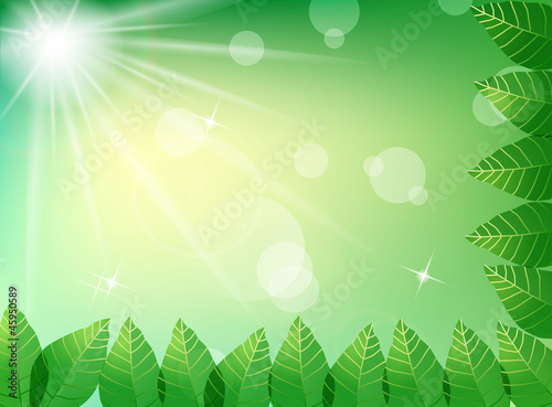 Green leaves in sunlight background