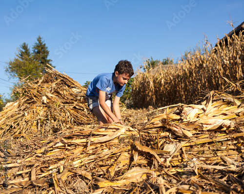 Child making stalks of stem after corn harvest