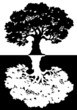 Two black and white trees. Vector