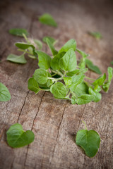 Fresh green mint on wooden table