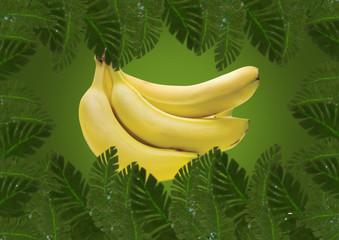 Banana na Selva