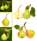 pears collage