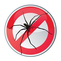 araignée - arachnide
