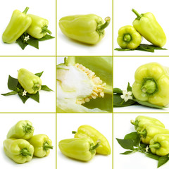 sweet green pepper collage