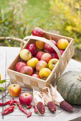 Erntezeit im Obst- und Gemüsegarten